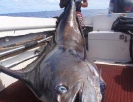 Marlin bleu, Polynésie française
