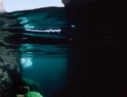 L\'araignée de mer